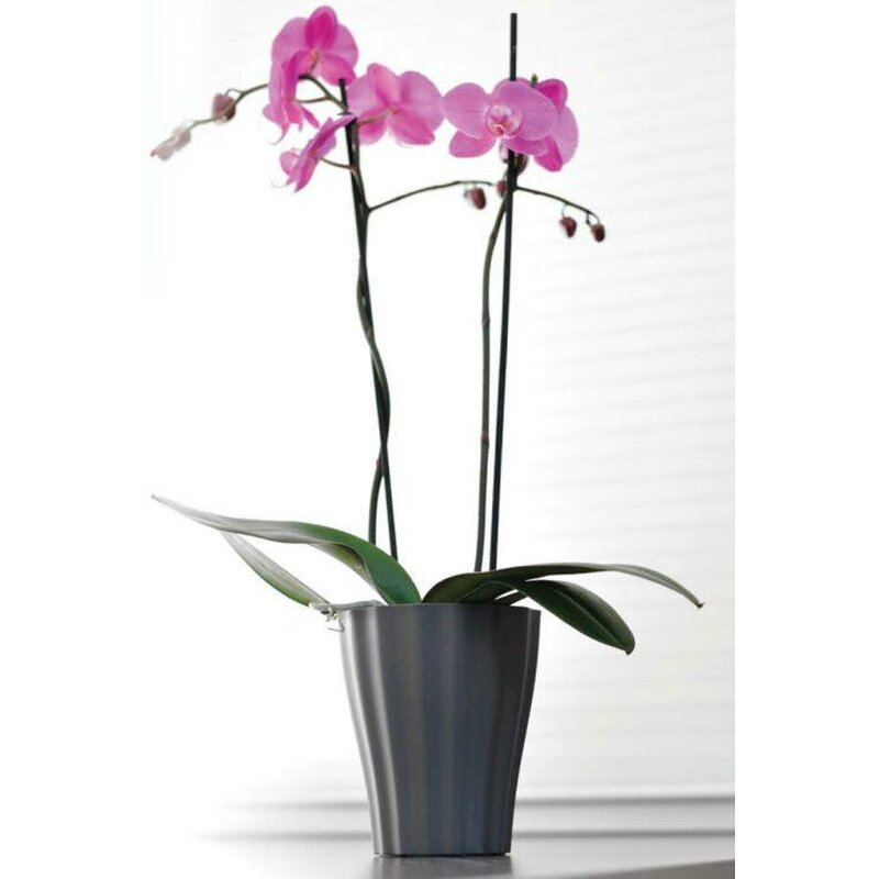 blumentopf f r orchideen 4 90. Black Bedroom Furniture Sets. Home Design Ideas